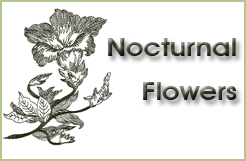 Nocturnal Flowers